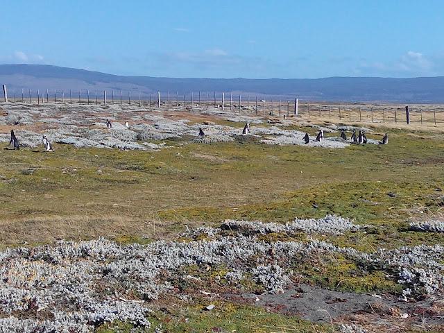 pingüinera del Seno Otway