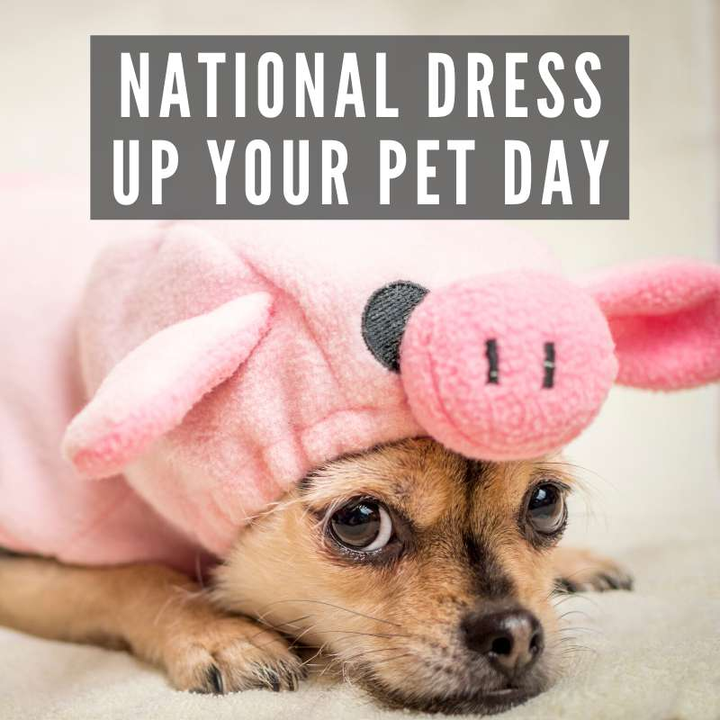 National Dress Up Your Pet Day Wishes Beautiful Image
