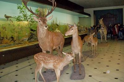 Αποτέλεσμα εικόνας για Μουσείο Γουλανδρή Φυσικής Ιστορίας