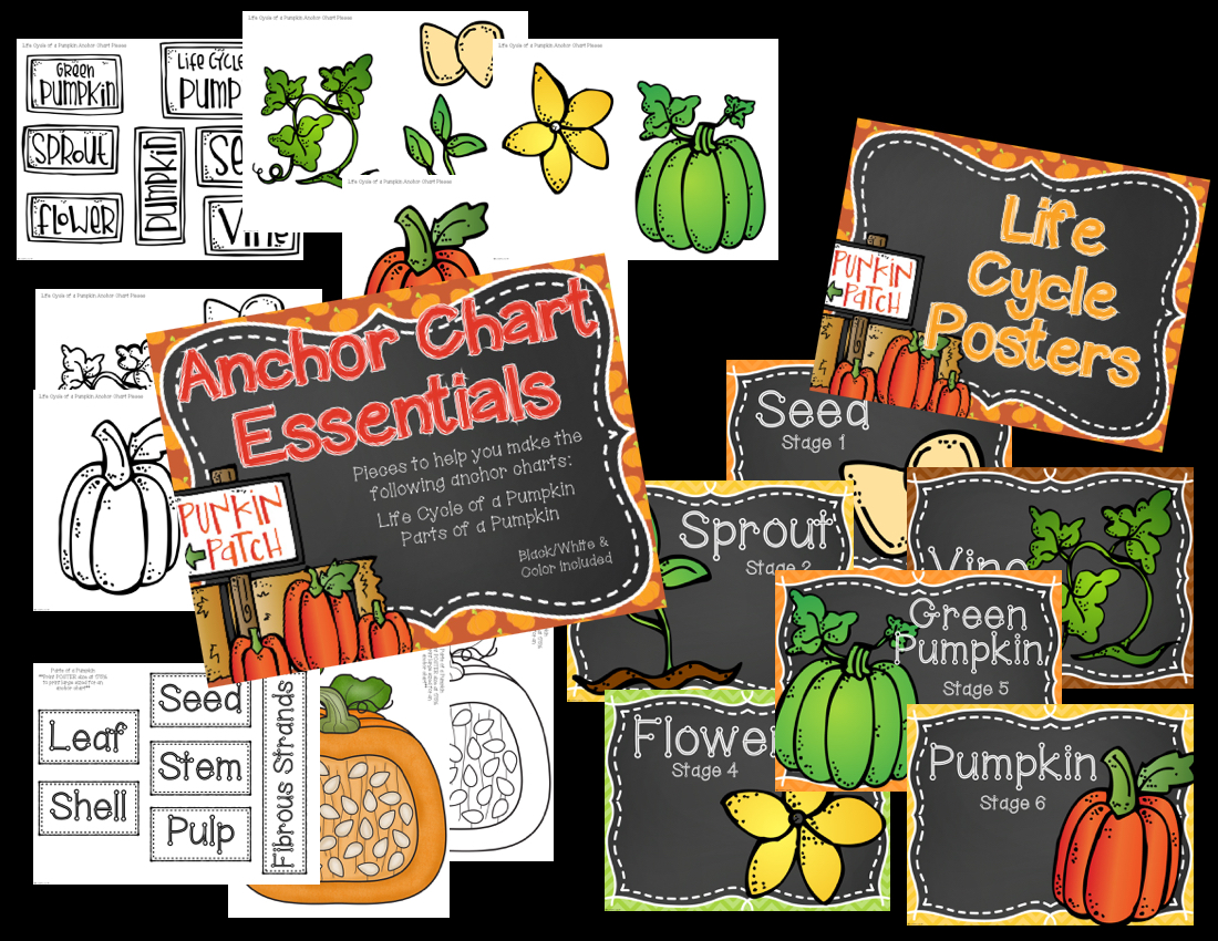 hight resolution of pumpkin activities