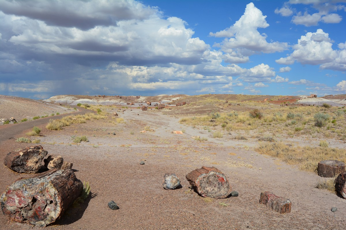 Crystal Forest Petrified Forest