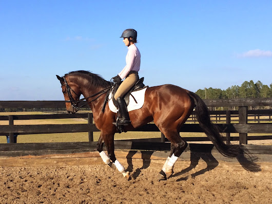 Successfully Importing Horses for Amateur Riders