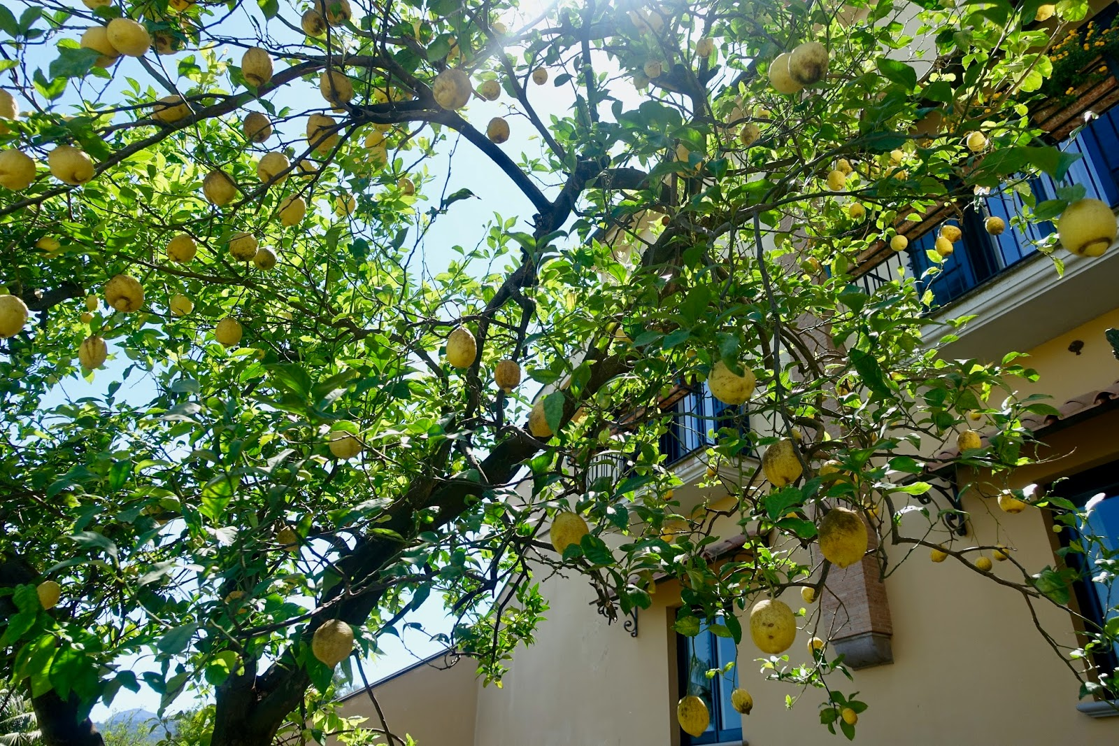 Sorrento Italy travel diary lemon trees