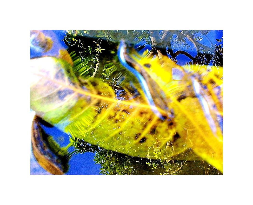Mobile Photography, Kaleidoscopic 05