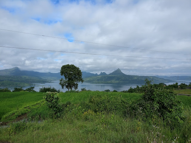 The beautiful view of the rice paddy fields along pawana lake on the way to Dudhiware Pass
