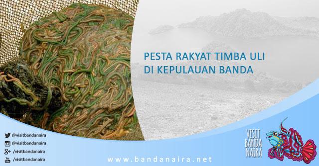 Lysidice oele, Eunicidae, Polychaeta, Banda Neira, Banda Naira, Kepulauan Banda, Pulau Banda