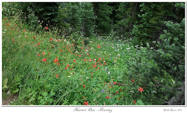 Marmot Pass: Flowering