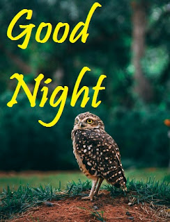 good night images with beautiful birds