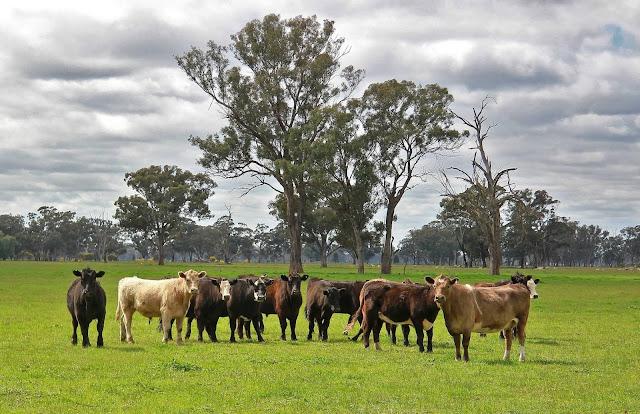 7 Hewan Ternak Bernilai Tinggi dan Menguntungkan
