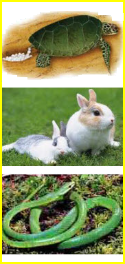 Hewan Bertelur Dan Melahirkan : hewan, bertelur, melahirkan, Berbagainfo:, Penggolongan, Hewan