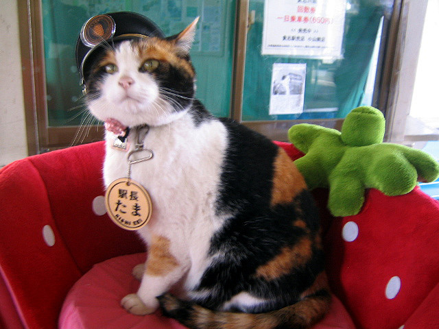Tama — Station Master of Kishi Station 1 by dugspr — Home for Good from flickr (CC-NC)