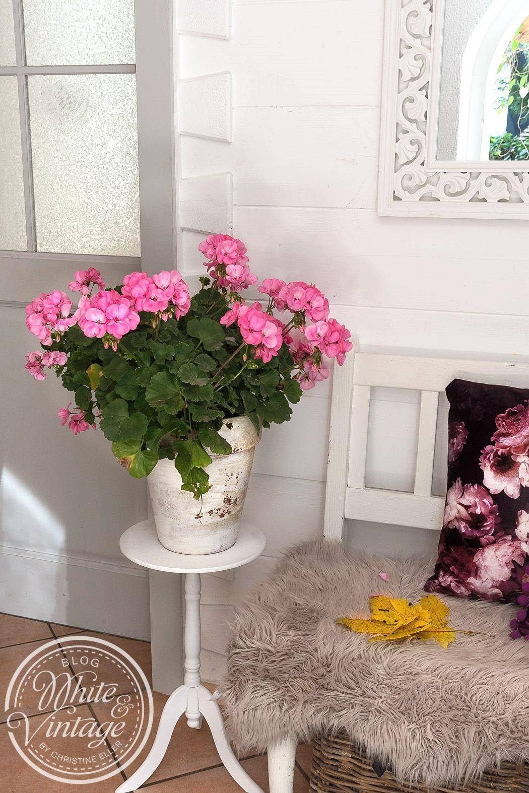 Blumen und Pflanzen in Wohnräumen sind Stimmungsmacher und vertreiben jeglichen Novemberblues.