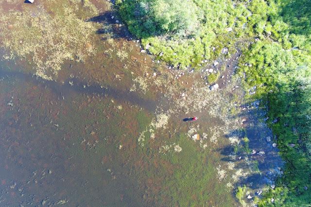 Dronekuvaa hyvin matalasta rannasta ja vesikasvillisuudesta