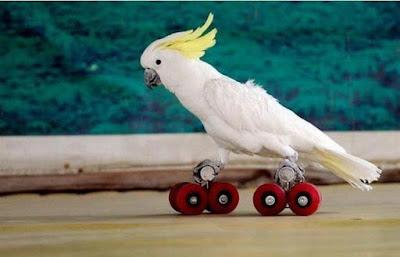 En Garip 10 Kuş Türü