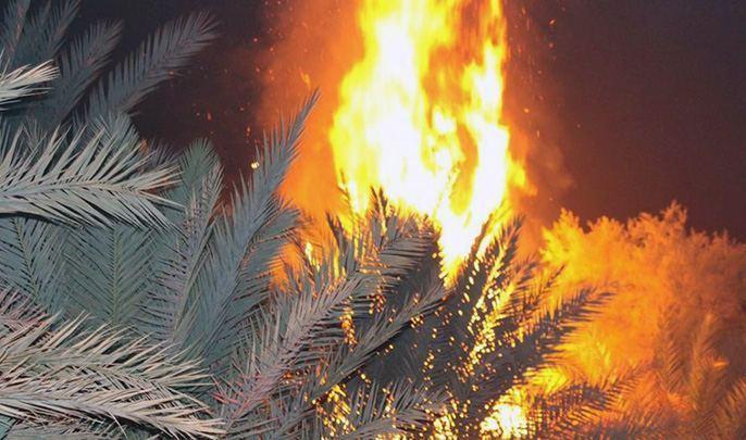 مصرع رجل حاول إطفاء حريق اندلع بواحة للنخيل