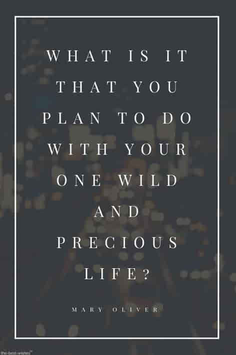 mary oliver life quote wallpaper