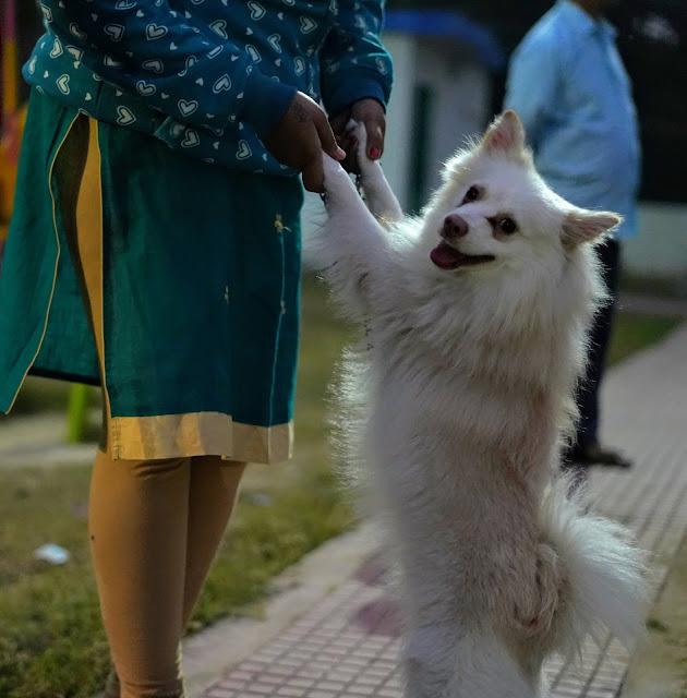 Spaniel Captured By Sourajit Saha 2