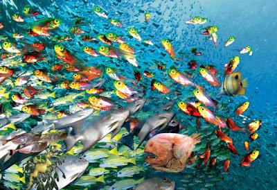 suara pemanggil ikan peran fisika dalam bidang kelautan