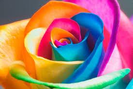 Significado De Las Rosas Según Su Color Bagatela
