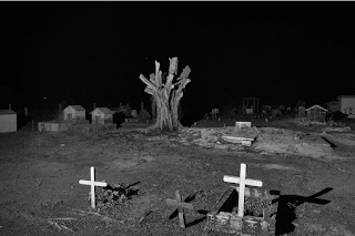 Photo by Tommaso Protti: A chopped tree inside a cemetery near Novo Progresso, Pará state.
