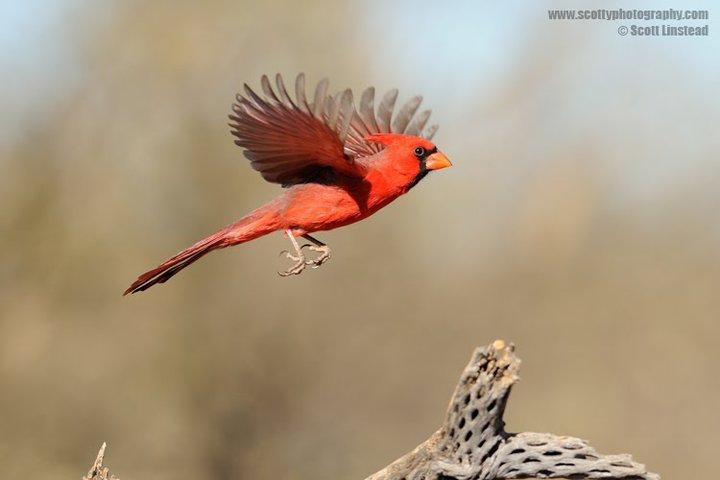 Turismo En Fotos: Aves Hermosas