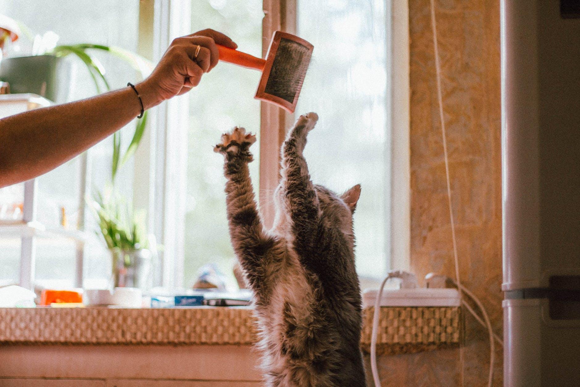 Avantages d'avoir un chat