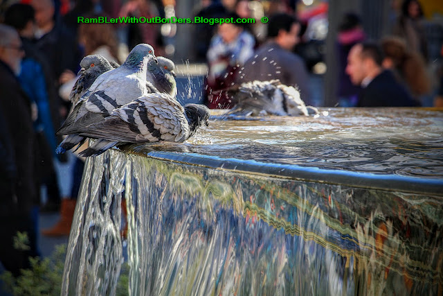 Pigeons on fountain, Puerta del Sol, Madrid, Spain