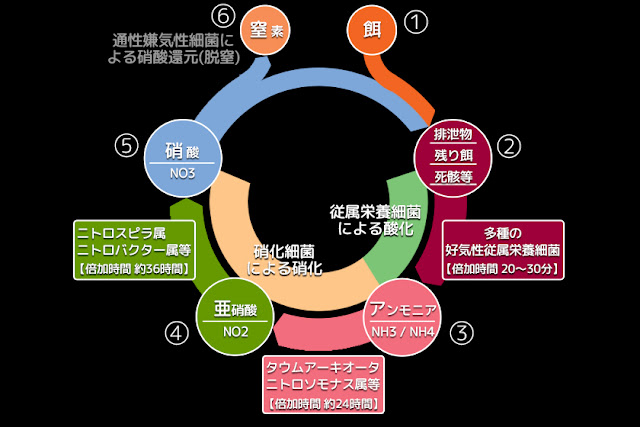 図1 生物濾過サイクルを表した略図