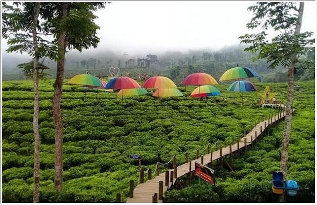 Kebun Teh Gunung Gambir;Top 10 Destinasi Wisata Jember;