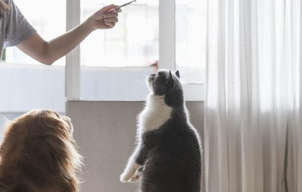 comment dresser un chat