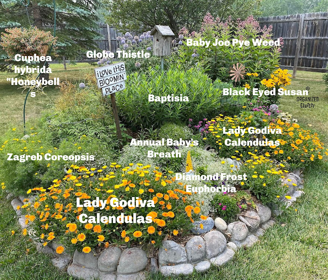 Photo of garden plants with labels