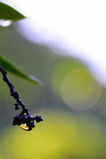 Mango Tree Abstracts