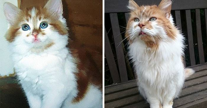 A cat adopted in 1988 celebrates its 32nd anniversary this year