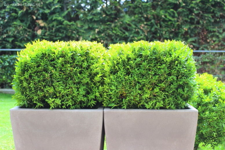 Ein klar strukturierter minimalistischer Garten, verschiedene Gräser, Buchs, Buxus sempervirens, Grüntöne, lineare Beete, clean, minimal styled garden, spring time in the garden, Frühling im Garten, by kebo homing, Südtiroler Food- und Lifestyleblog