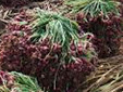 harga bawang hari ini dipasar kramat jati,harga bawang merah hari ini dipasar caringin Bandung,harga bawang merah di pasar cibitung