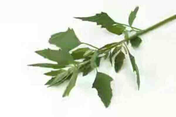 बथुआ खाने के फायदे | Health benefits of Bathua