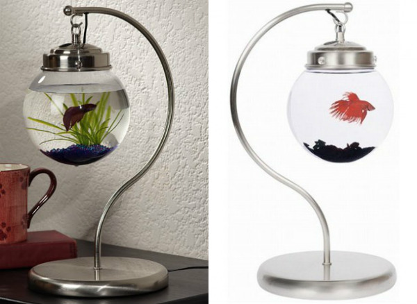 unusual fish tanks uk
