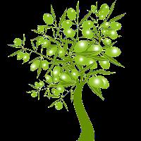Bonus Verde (Green bonus)