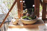 山野草盆栽の完成作品(台湾バイカカラマツ ヘビイチゴ カワラナデシコ))