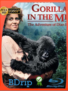 Gorilas en la niebla (Gorillas in the Mist) (1988) BDRIP1080pLatino [GoogleDrive] SilvestreHD