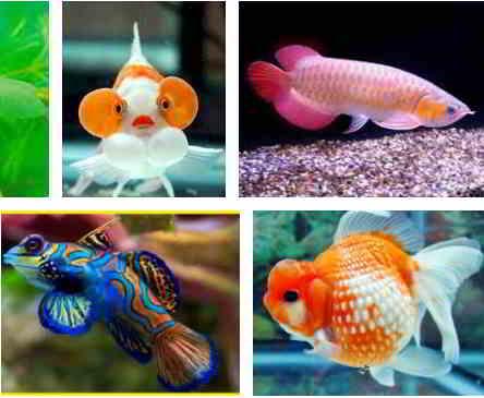 Ikan Hias Lucu