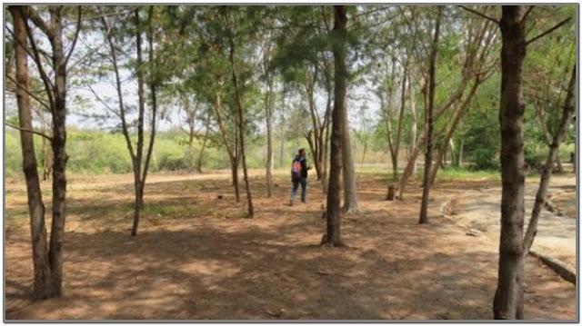 Riverside Mangrove Porong;