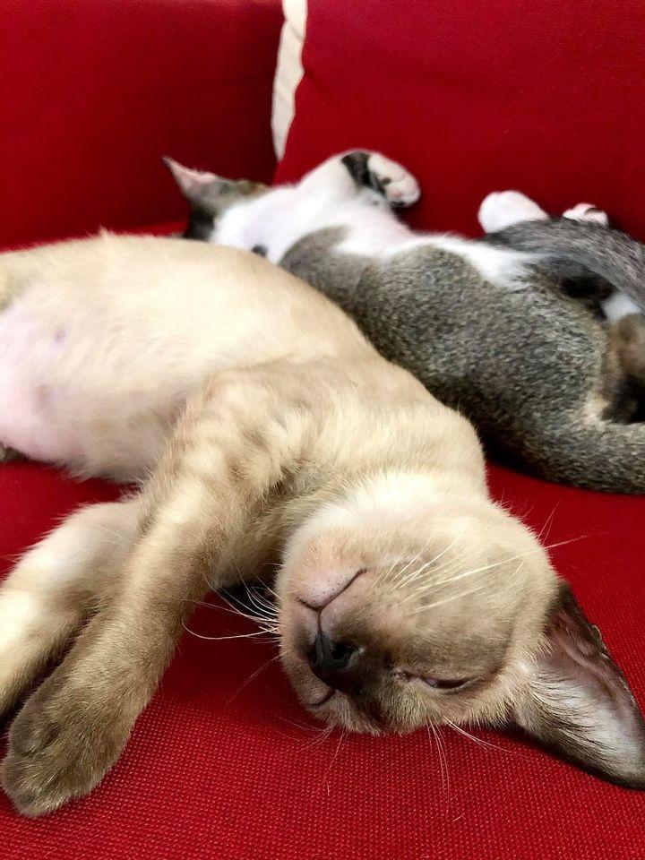 Kelebihan Memelihara Kucing. Salah Satunya Hilang Stress!