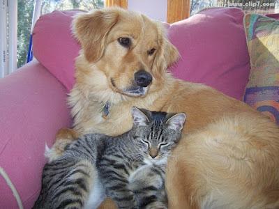 imagen tierna de gato recostado sobre un perro durmiendo siesta