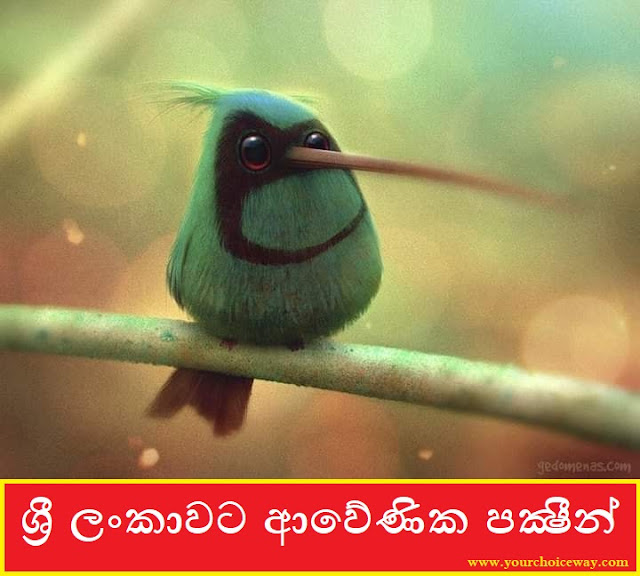 ශ්රී ලංකාවට ආවේණික පක්ෂීන් 🐤🐦🕊️🦆🦅 (Birds Endemic To Sri Lanka) - Your Choice Way