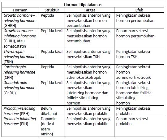 Daftar Hormon Hipotalamus, Struktur dan Efek Yang Ditimbulkan.