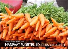 15 Manfaat Wortel yang menjadikannya sayuran ini sangat Istimewa