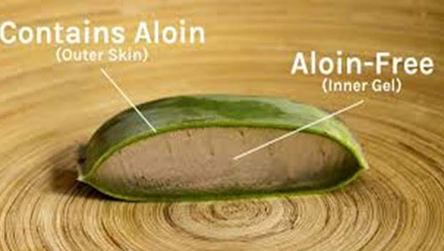 Until now, no complication of Aloe Vera has been exposed, apart from the substance Aloin included in Aloe Vera that can create some adverse reactions at the time of engulfing. Nevertheless, the substance Aloin is generally separated while dispensation.