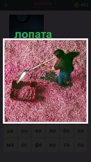 мужчина лопатой собирает в лоток розовые лепестки
