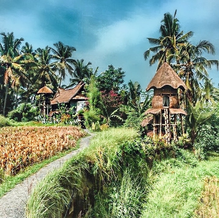 Rice Field Airbnb in Ubud Indonesia